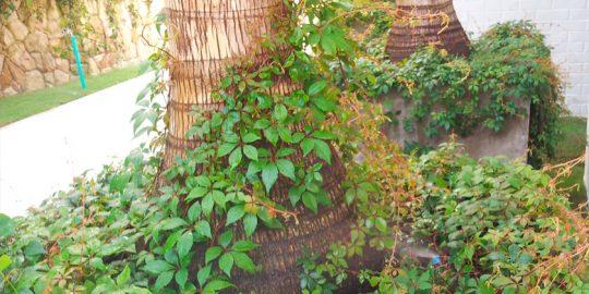 riego-jardin-aldebaran-cali-wamco05